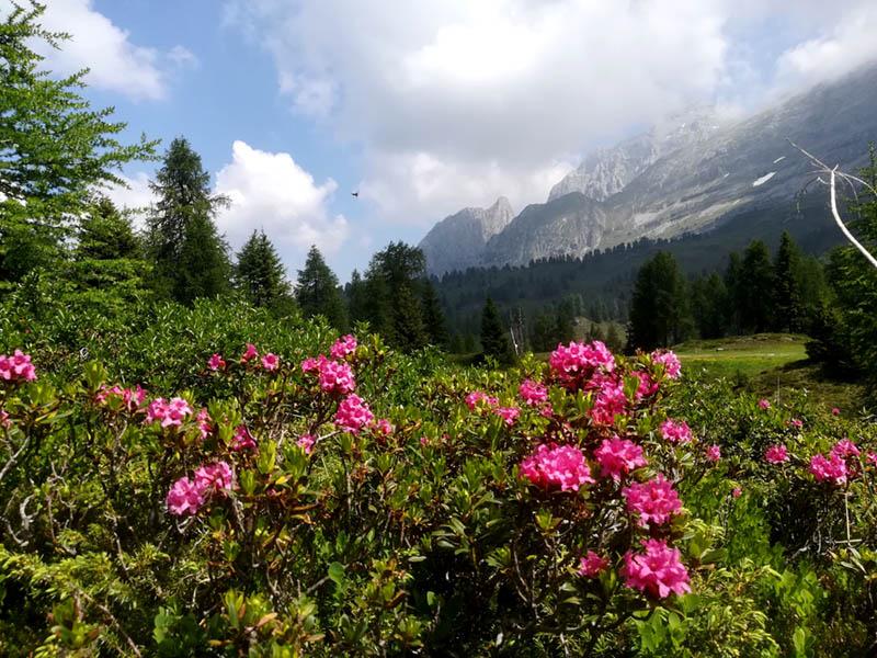 Trentino Scalfi